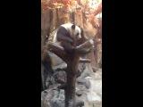 Милые панды моими глазами)