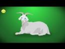 PULCINO PIO - El Pollito Pio venganza Official video - YouTube